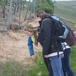 Interessantes im Gras auf dem Rotweinwanderweg